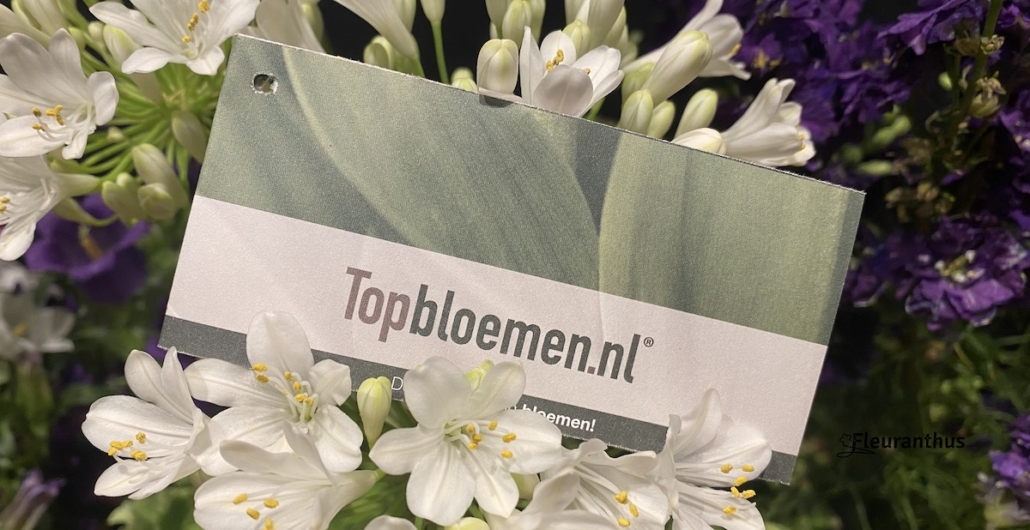 Topbloemen Enschede